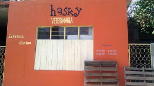 Front of Hasky Veterinarian